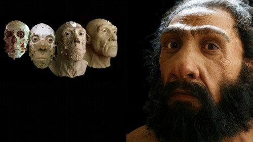 A scientist-artist recreates human ancestors by studying their bones