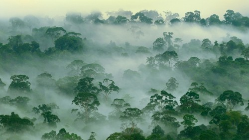 Rainforests are 'worth more alive than dead,' according to science — and economics