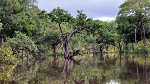 Brazil's Bolsonaro wants to mine on Indigenous lands — illegally