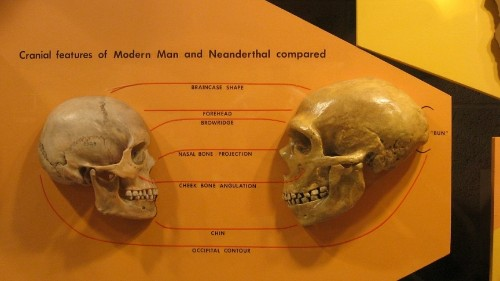 Neanderthals and modern humans co-existed in Europe for several thousand years