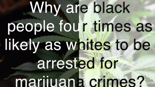 Why are black people four times more likely than whites to be arrested for marijuana crimes?