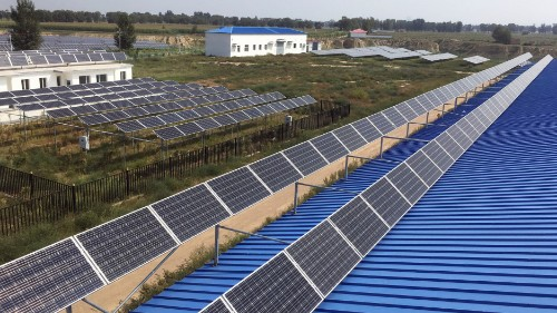 Energy and food together: Under solar panels, crops thrive