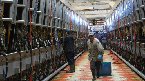 For a lesson on immigration reform, head to an Idaho dairy farm