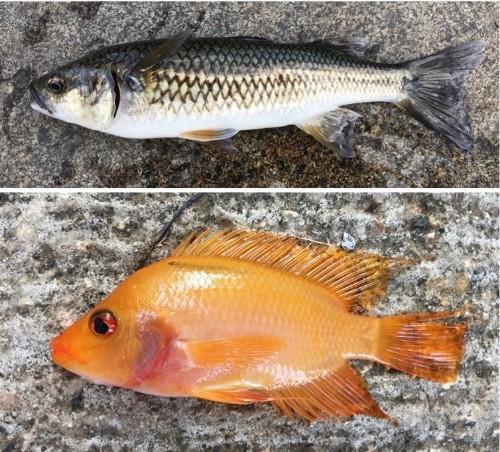 Caribbean fish love catastrophic hurricanes
