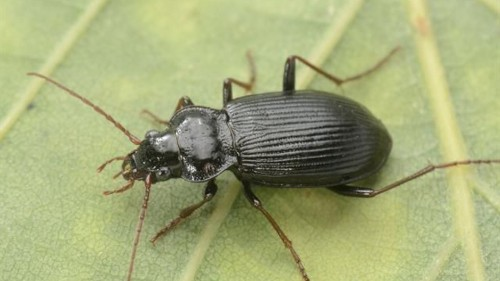 Invasive insect species on the move, with big consequences