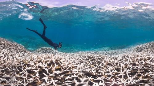 'Global bleaching event' threatens corals around the world
