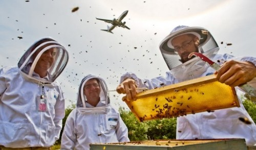 A new home for honeybees, just off the tarmac