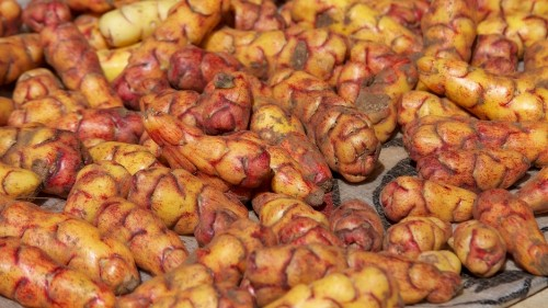The Martian was right. NASA Is studying Peruvian potatoes for farming on Mars.
