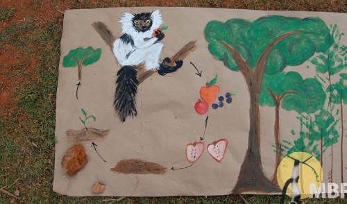 Lemur poop might save Madagascar's forests — and economy