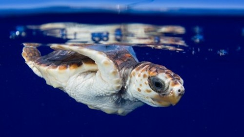 A Florida nail technician helped researchers develop a tracking device for endangered sea turtles