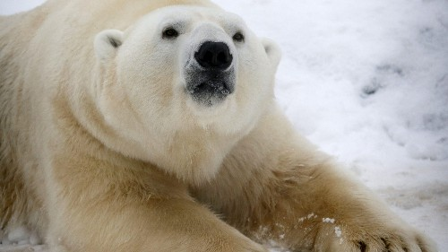 """People are wildly misinterpreting a """"heartwarming"""" video of a polar bear playing with a dog"""