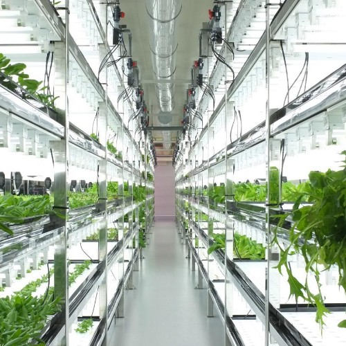 Toshiba's high-tech grow rooms are churning out lettuce that never needs washing