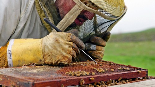 Scientists discover what's killing the bees and it's worse than you thought