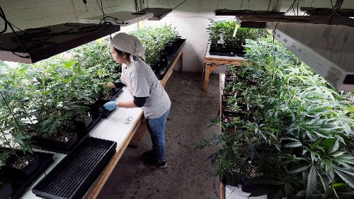 How much tax do marijuana businesses pay?
