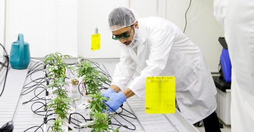 Here is the curriculum for the US's first undergraduate weed degree