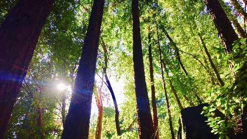 "Japanese ""forest medicine"" is the science of using nature to heal yourself—wherever you are"
