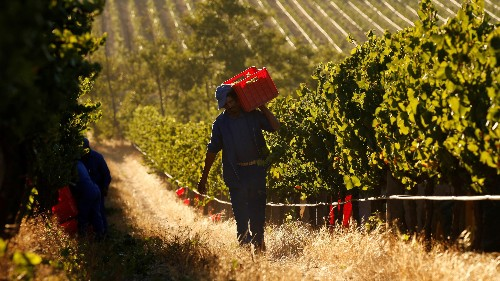 "Denmark's supermarkets are refusing to stock South African wines made by ""slavery in the vineyards"""