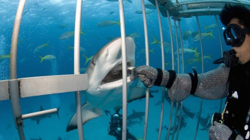 $314 million in shark ecotourism probably won't dent the global fin trade, but it's a start
