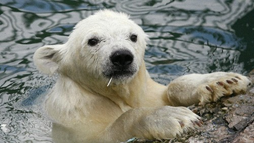 Climate change is warming the Arctic faster than expected