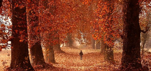 In photos: Kashmir's stunning, fiery, and forlorn autumn is missing its tourists this year