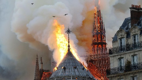 Were ravens flying above the Notre Dame fire? We ask the experts