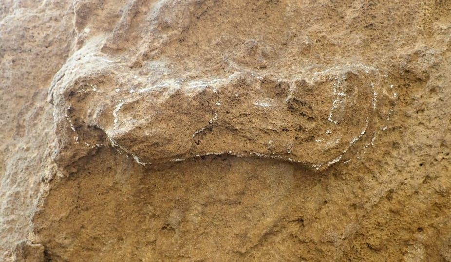Scientists have found new fossil tracks belonging to human ancestors in South Africa