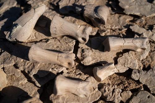 Hunting for dinosaur bones in the digital age