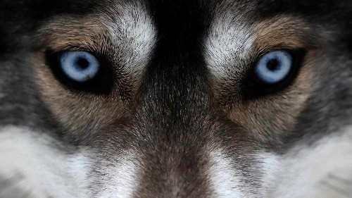 The neuroscience that shows us what it's like to be a dog