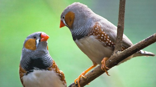 Study: Birds that mate for love have more successful bird families