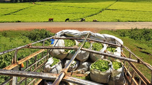 African farmers say they can feed the world, and we might soon need them to