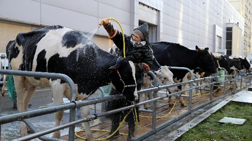 Perfect Day: Meet the startup that makes milk—without cows