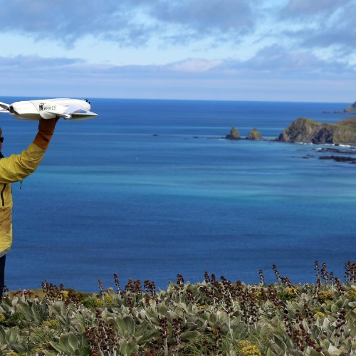 Modified drones are keeping an eye on the world's wildlife