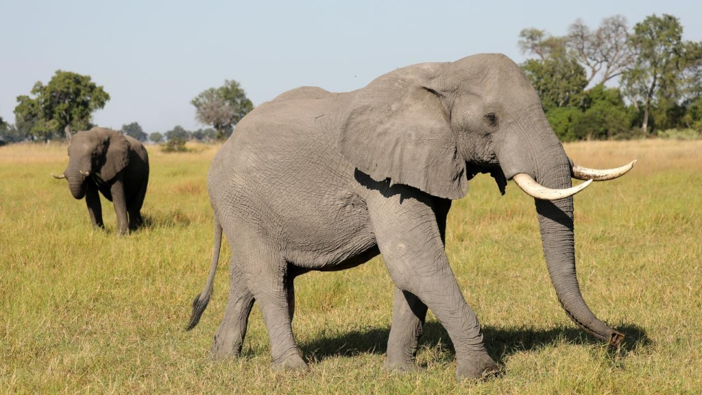Scientists blame climate change for a bacteria that mysteriously killed 300 African elephants
