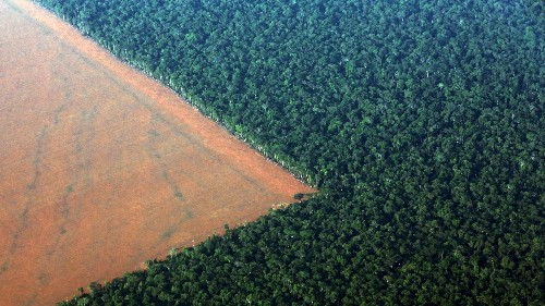 Forests are growing again where human well-being is increasing