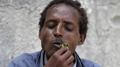 The rise, fall, then grudging acceptance of khat, East Africa's controversial stimulant