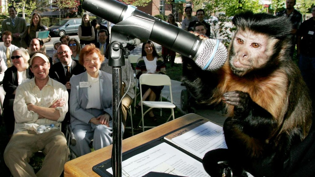 People make the same basic investment decisions as monkeys, scientists find