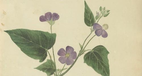 The secret feminist history of illustrating plant life