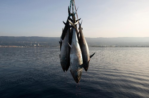The swordfish you're eating might actually be shark