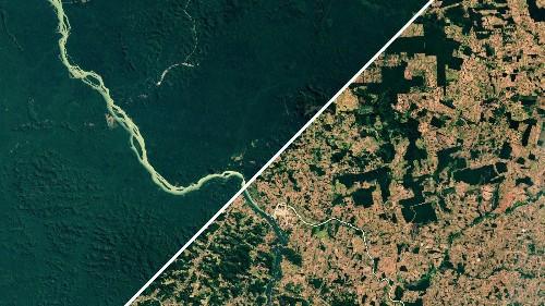 Brazil's Amazon deforestation accelerating under Jair Bolsonaro