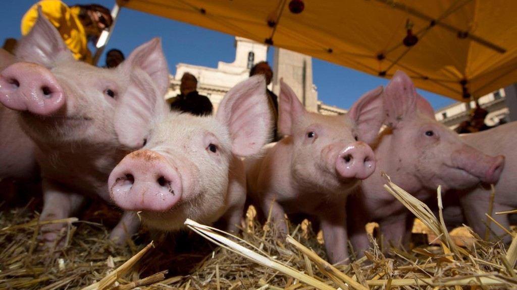Pigs with human hearts, and other wild tales from the future of organ donation