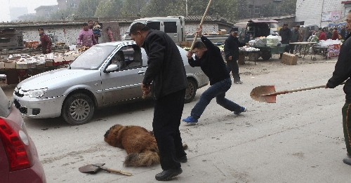Thousands of huge, aggressive dogs are roaming Tibet after their rich Chinese owners abandoned them