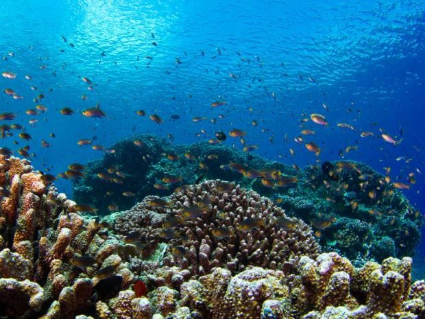 Despite global warming, some reefs are flourishing, and you can see it in 3D