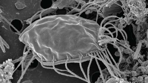 """""""Little ogres"""": A scientific discovery has unearthed a new kingdom of life"""