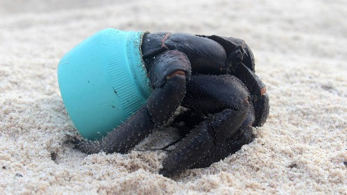 """Removing plastics from the oceans is """"not environmentalism, it's good business"""""""