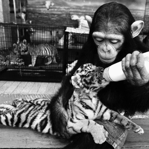 What the study of animal emotions shows us about being human