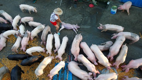 China is producing way more pork than it actually wants to eat