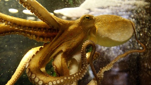 The scientific explanation for why humans are so convinced that aliens look like octopuses