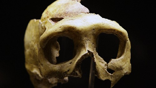 Bone discovery suggests a mysterious ancient species of human lived alongside our ancestors