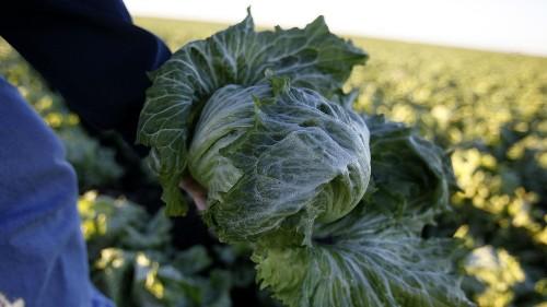 E. coli outbreak: Consumer Reports says don't eat romaine lettuce