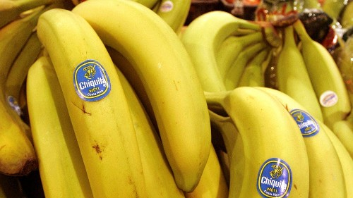 Inside the quest to save the banana from extinction